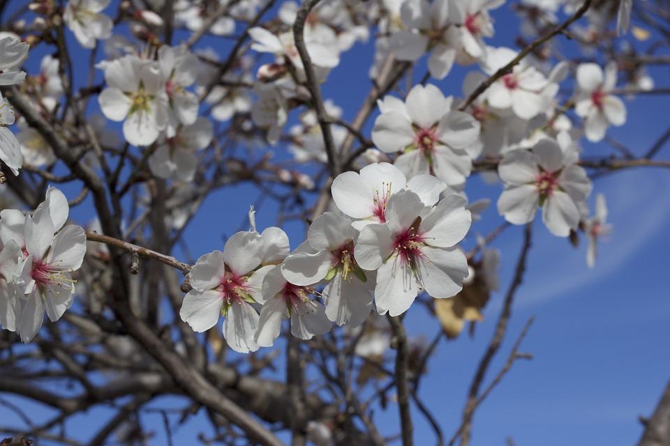 spring flowers algarve
