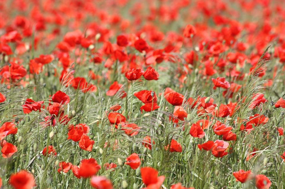 flowers algarve