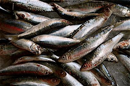 Sardines Algarve
