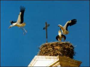 Storks Silves Portugal